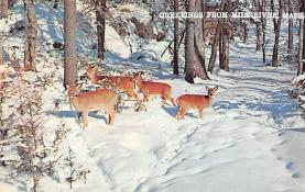 top005059 - Deer Post Card
