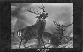 top005069 - Deer Post Card