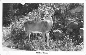 top005071 - Deer Post Card