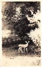 top005075 - Deer Post Card