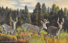 top005083 - Deer Post Card