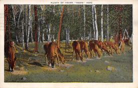 top005085 - Deer Post Card