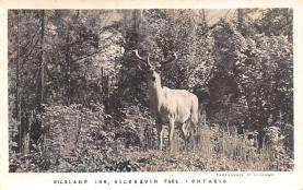 top005093 - Deer Post Card
