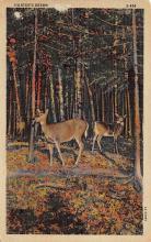 top005097 - Deer Post Card