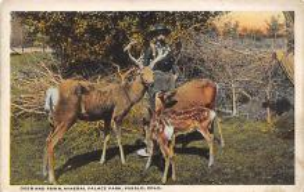 top005099 - Deer Post Card