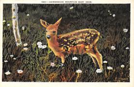 top005101 - Deer Post Card