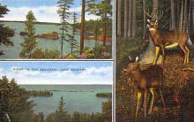 top005103 - Deer Post Card