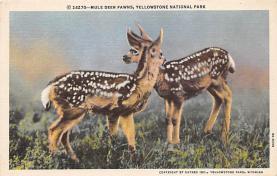 top005105 - Deer Post Card