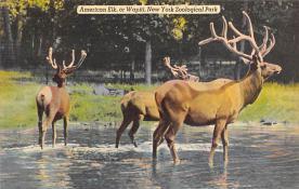top005107 - Deer Post Card