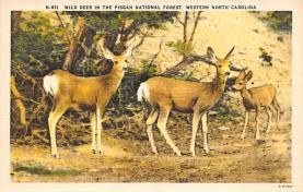 top005113 - Deer Post Card