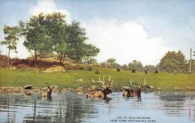 top005115 - Deer Post Card