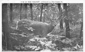 top005119 - Deer Post Card