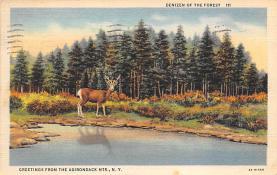 top005121 - Deer Post Card