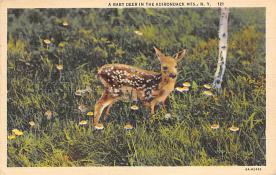 top005123 - Deer Post Card