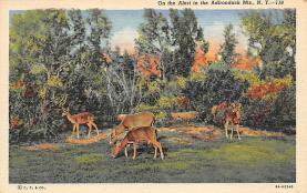 top005125 - Deer Post Card