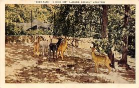 top005127 - Deer Post Card
