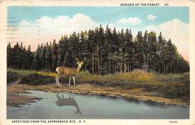 top005129 - Deer Post Card