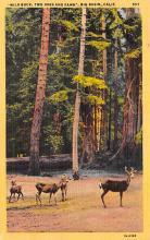 top005131 - Deer Post Card