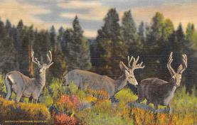 top005133 - Deer Post Card