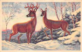 top005135 - Deer Post Card