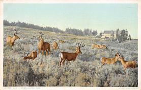 top005139 - Deer Post Card