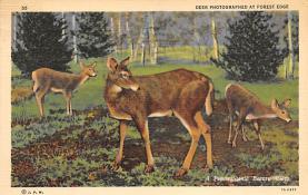 top005143 - Deer Post Card
