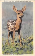 top005145 - Deer Post Card