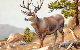 top005147 - Deer Post Card