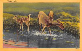 top005151 - Deer Post Card