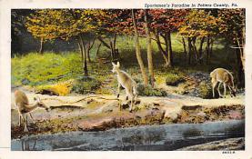 top005153 - Deer Post Card