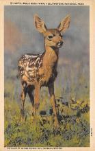 top005155 - Deer Post Card