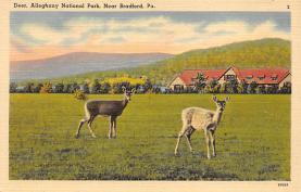 top005159 - Deer Post Card