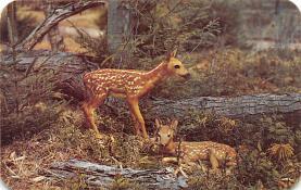top005161 - Deer Post Card