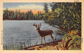 top005167 - Deer Post Card