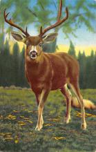 top005171 - Deer Post Card