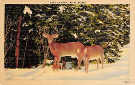 top005175 - Deer Post Card