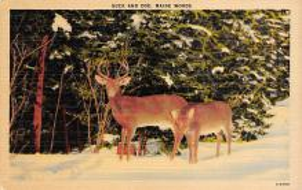 top005177 - Deer Post Card