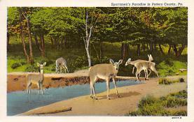 top005183 - Deer Post Card
