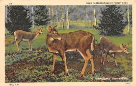 top005187 - Deer Post Card