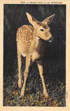 top005189 - Deer Post Card