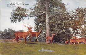 top005191 - Deer Post Card