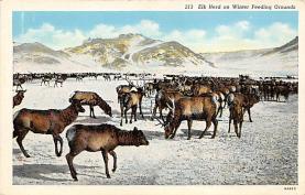 top005193 - Deer Post Card