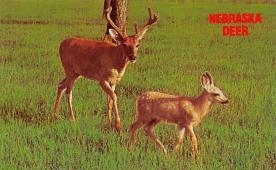 top005195 - Deer Post Card