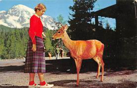 top005197 - Deer Post Card