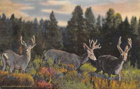 top005199 - Deer Post Card