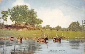top005213 - Deer Post Card