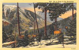 top005217 - Deer Post Card