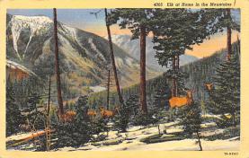 top005221 - Deer Post Card
