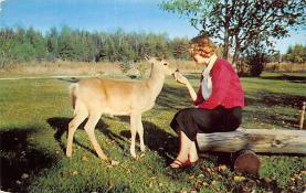 top005231 - Deer Post Card