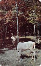 top005235 - Deer Post Card
